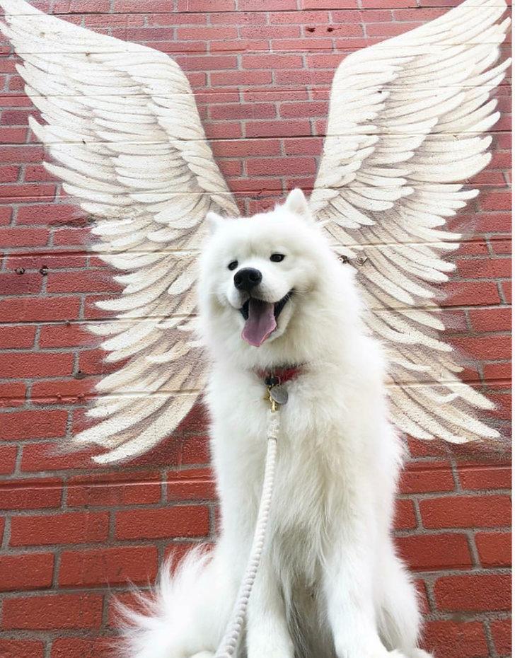 超愛剪毛的狗狗!24張看了心情瞬間變好的「動物傻萌照」