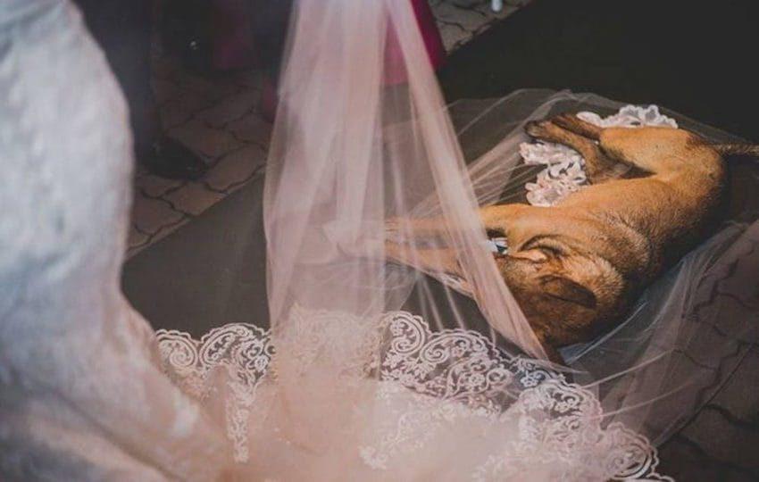 婚禮一半下大雨 淋溼浪浪「躺頭紗睡翻」:就決定是妳惹❤