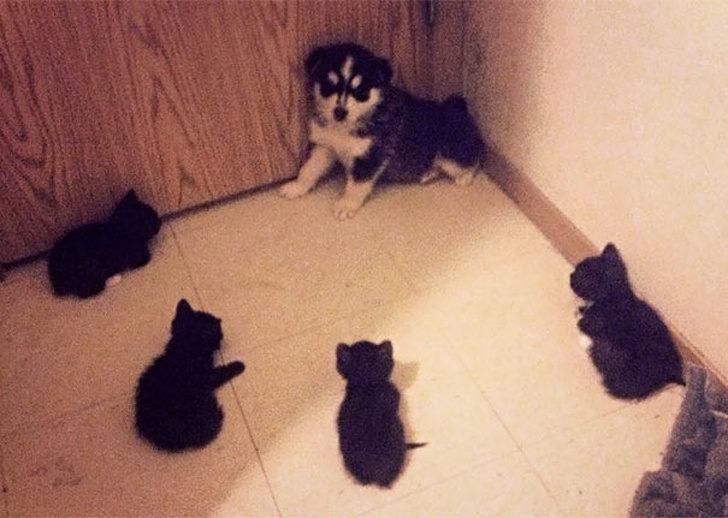 21張讓人見識「何謂不共戴天之仇」貓狗大戰照
