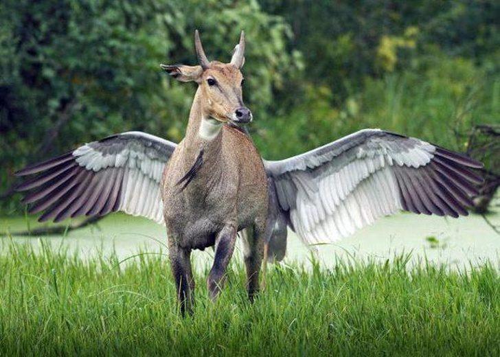 21張絕對不是PS的「超自然照片」 有翅膀的狗狗太萌啦~