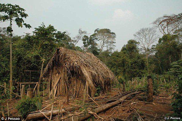 亞馬遜部落最後的「洞中土著」 靠砍樹獵猴維生從未正面曝光!