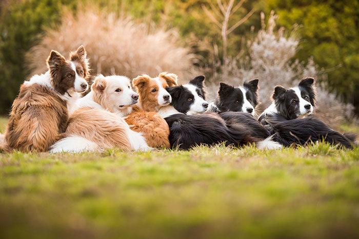 30張讓你心窩暖暖「2018年狗狗攝影大賽」得獎作品