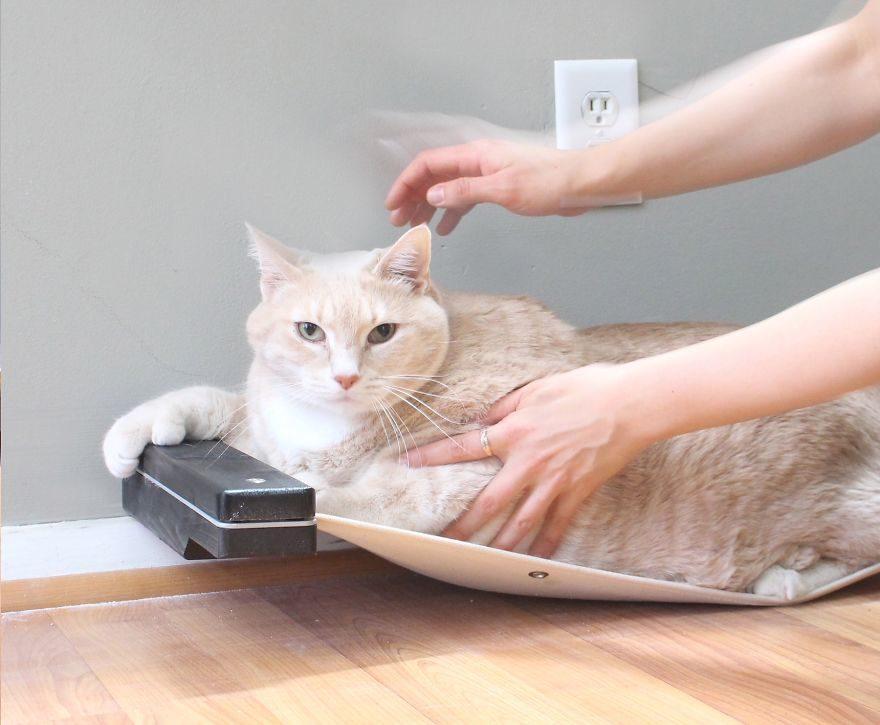 情侶收編「15KG巨貓」幫瘦身 每天努力爬樓梯鏟肉:呼~累死本皇了!