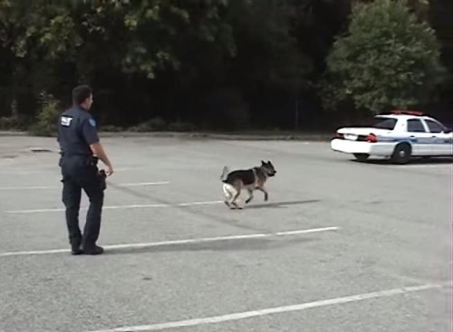 聰明警犬手勢一下衝向警車 「打開車門」乖乖坐好:出任務囉!