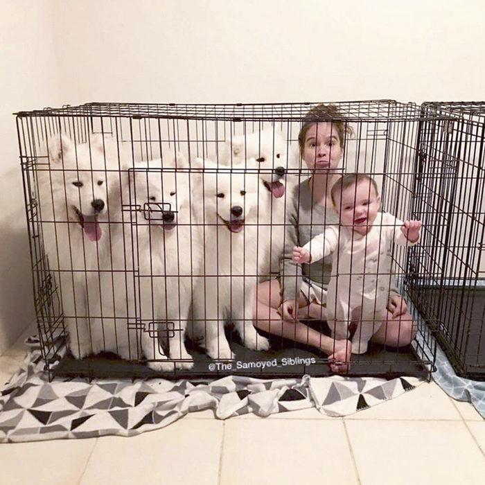 甜蜜的負擔!媽媽分享「2寶+薩摩家族」生活 每天光洗澡就花8小時...
