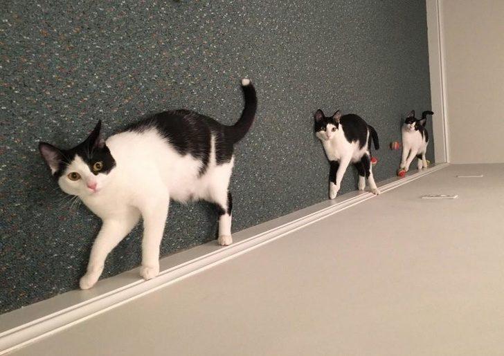 16張「你被眼睛慘出賣」視覺錯覺照 消失的貓咪!