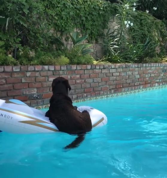 小黑狗悠閒漂漂船躲太陽 下秒被「蜜蜂小子」嚇到併軌:我的老天鵝啊~