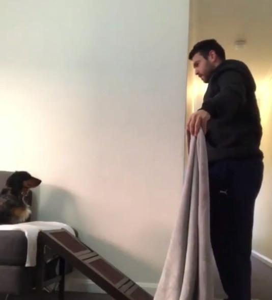 他興奮找臘腸玩「毛毯躲貓貓」 拋毯子瞬間摔狗吃屎:老爸你還好嗎?