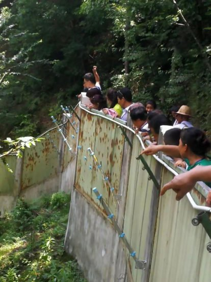 影/中國遊客嫌熊貓午睡無聊 「拿石頭狂丟」:快起來啊