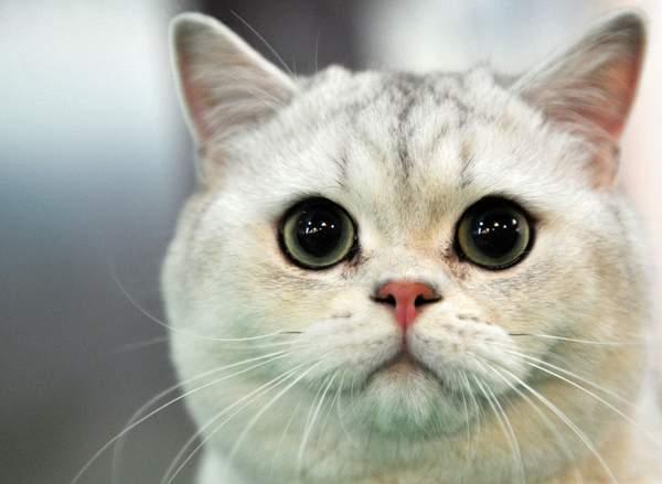 澳洲爬蟲類越來越少 專家跟著研究看傻:一隻貓每年殺225隻...