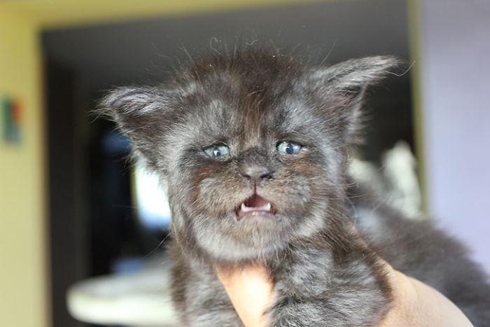2月小貓「神複製人臉」 憂鬱文青小生爆紅:工讀生出來!