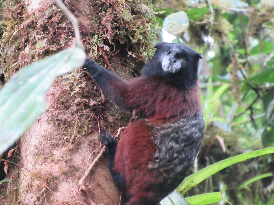 27個「在南美洲出現」的特殊生物 白鼻浣熊也太可愛~
