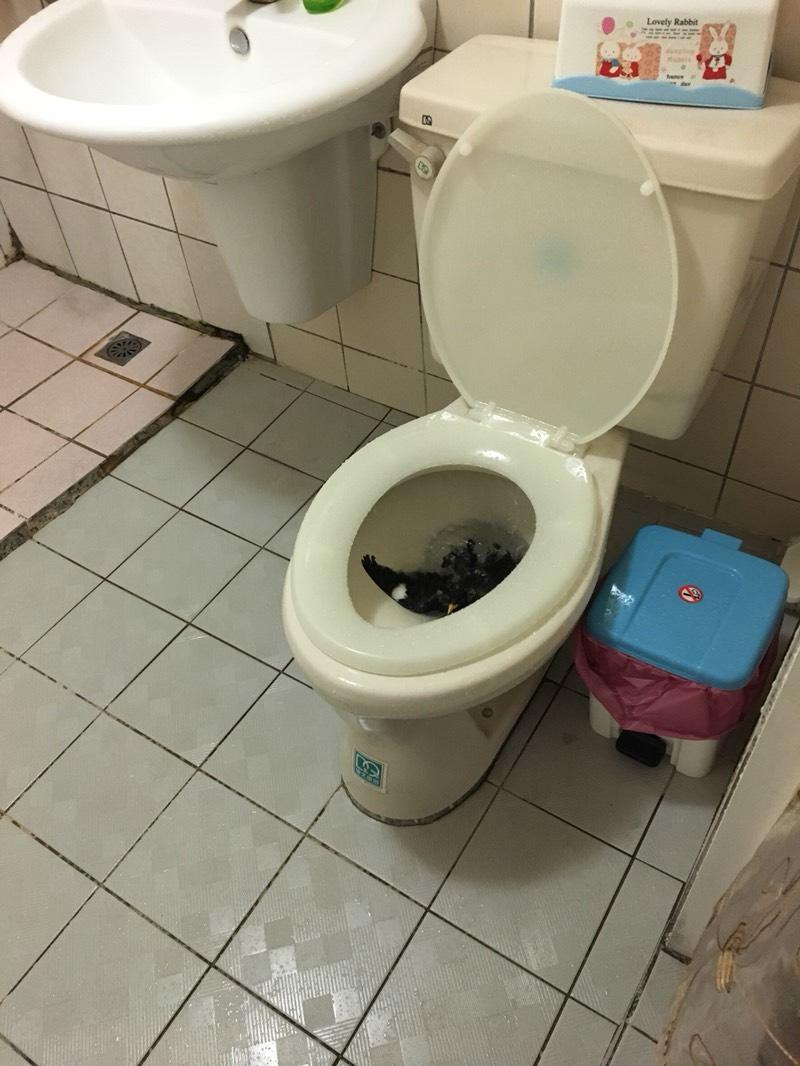 他上廁所到一半馬桶噴出「大鵰本尊」 崩潰挖出來晾乾放生:怎麼爬進去的啊?