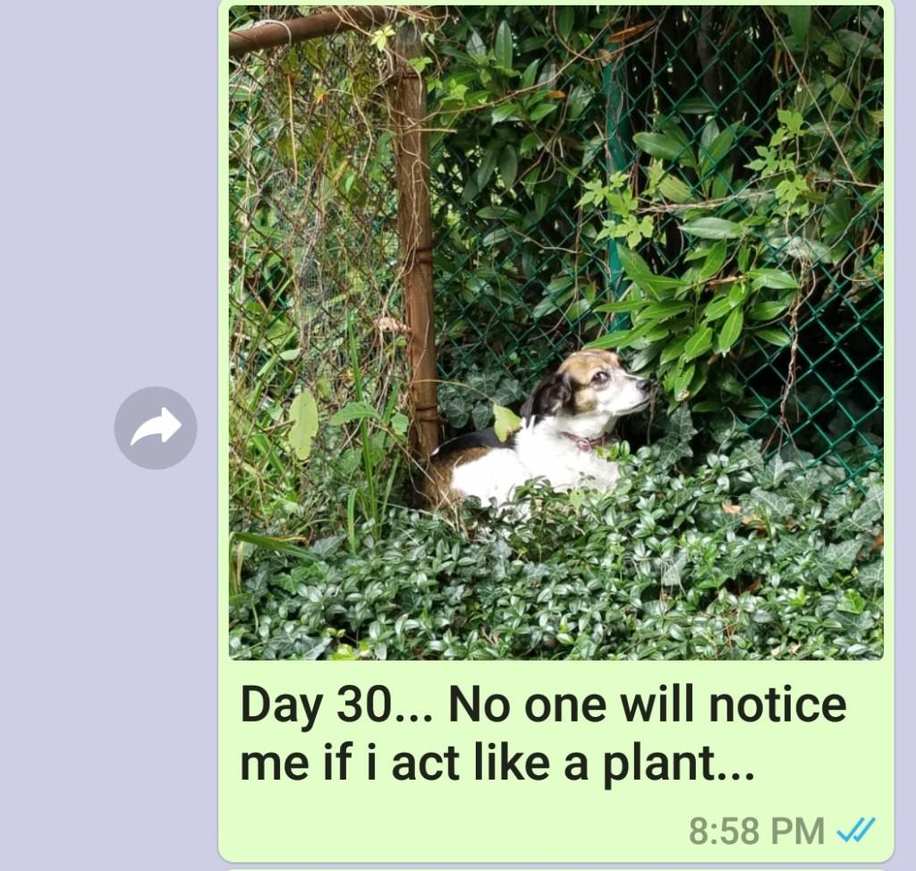 媽媽想念兒子不敢說 使出「一天一汪照」攻勢:狗狗(我)想你了QQ