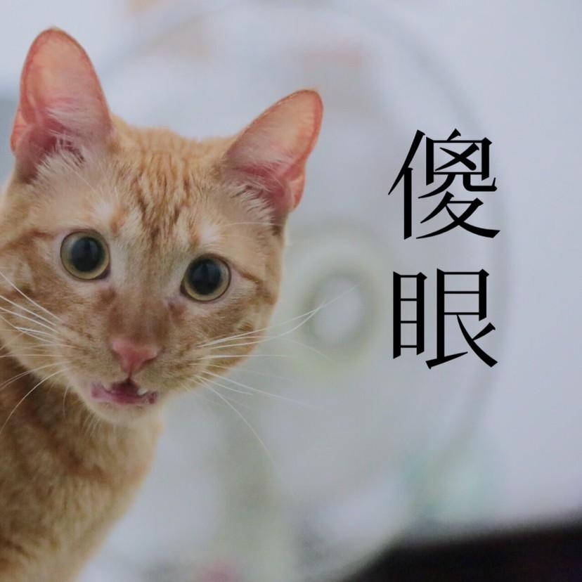 胖猫脚滑意外变吊单杠 肥腿撑不住大喊:「铲屎的,护驾啊!」 -article_11286_1_b-1