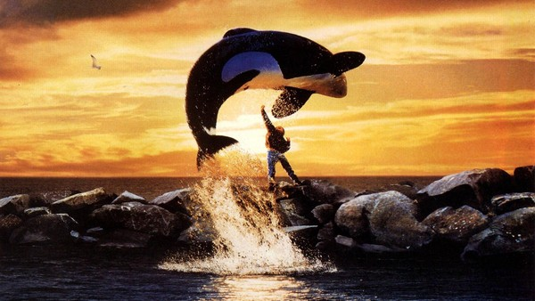 馴服後拋棄...海洋館殺人鯨24年被圈養 放生卻因思念人類擱淺結束鯨生