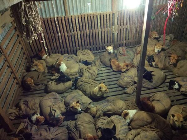 布袋都在蠕動...36隻狗狗綑成「肉團」 專挑受傷狗下手:這樣比較快