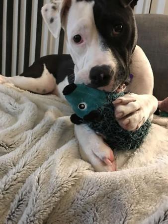 刺蝟寶寶是我最後夥伴...棄養汪帶娃娃「吃喝拉撒」 只因為出生就它陪伴