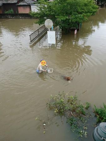 暴雨淹到腰!阿公堅持「水中騎車」遛狗 網笑:根本游泳,哪裡在散步啦