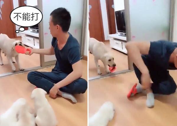 平頭哥說教「8屁汪繼續玩」...抄拖鞋準備教訓 汪媽急:母湯啦~