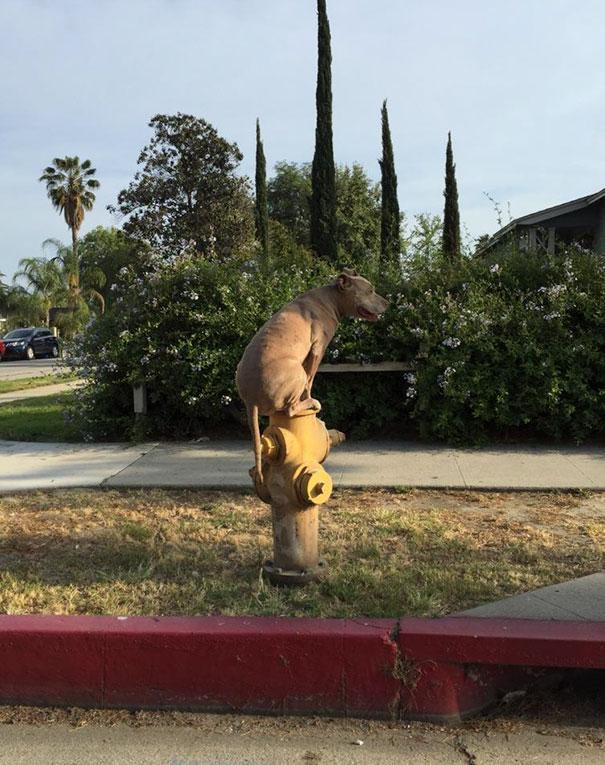 23張證明狗狗「腦袋永遠慢10拍」的蠢照 為什麼又有哈士奇啊!