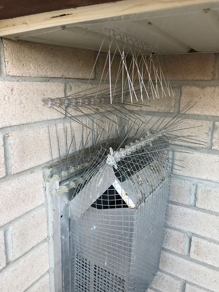 鳥媽堅持要在排氣口築巢!人鳥大戰「一鬥就是4年」屋主崩潰了