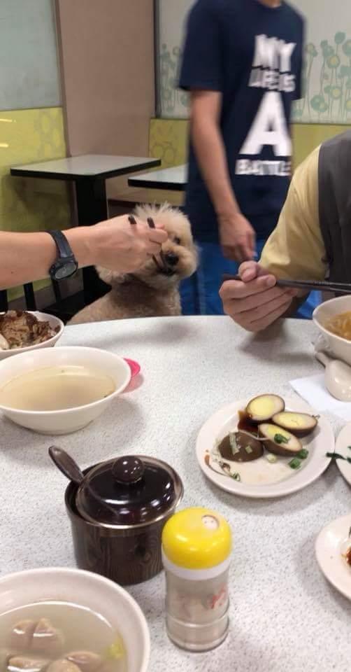公德心一起吃了?女主人筷子夾菜給狗 同桌苦主:那是公用的欸