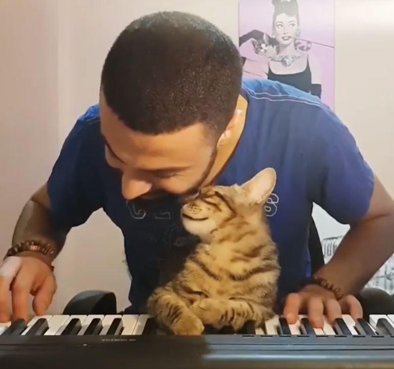 主人教貓皇彈琴!琴聲太好聽「貓皇陶醉到身體失控」甜翻啦❤