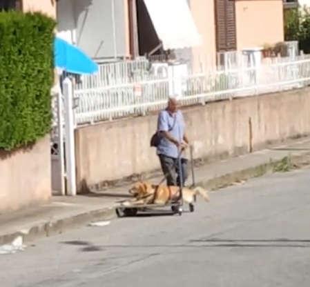 愛犬走不動了 老爺爺不離不棄「用推車+背帶」帶散步