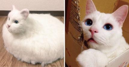 超詭異「車輪餅白貓」走出角落 皮毛翻開塞先進機器人...網:驚悚感爆表