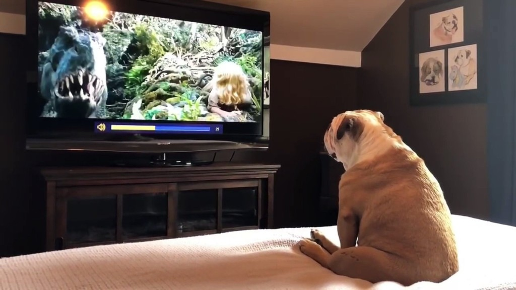 狗狗看電影《金剛》超入戲 驚險時刻「英雄一現身」:汪汪~喔耶