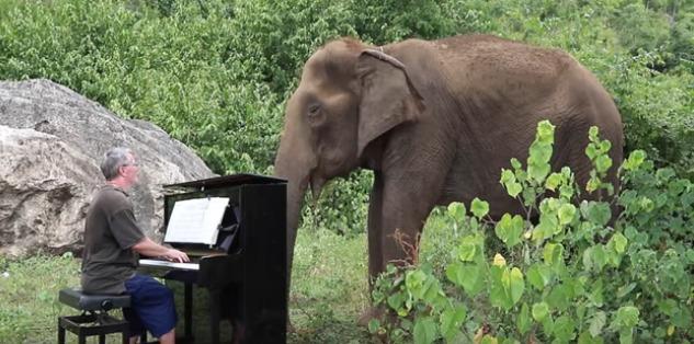 音樂家園區彈鋼琴 80歲盲眼母象「輕擺象鼻HEN享受」:好好聽~