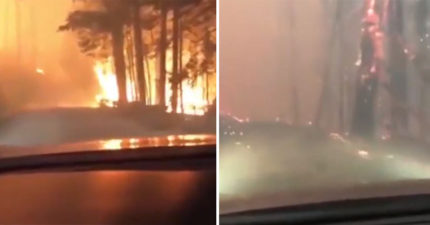 影/遇森林大火!冷靜父果斷棄車逃出火場 兒:再晚10分鐘我們就掰了