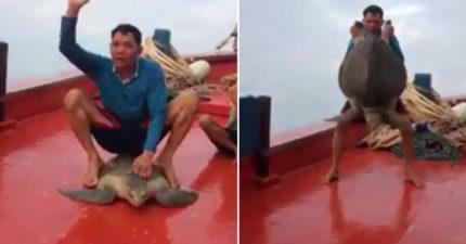 海龜被漁夫「整個人坐在背上當馬騎」 不斷揮動前肢掙扎他卻開心歡呼!