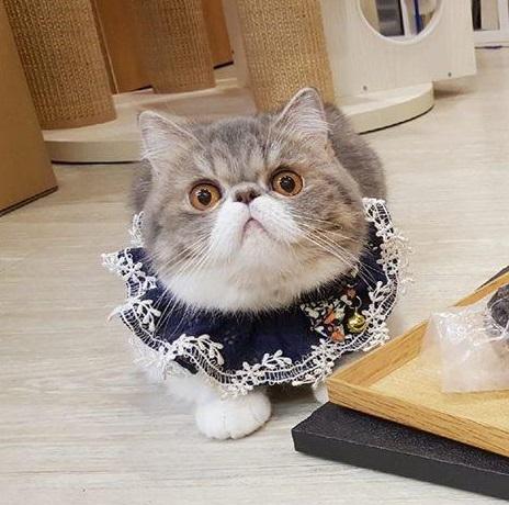 正港傻眼貓咪!主人買鱷魚頭回家 喵嚇傻:夭壽哦~這是我的晚餐逆?
