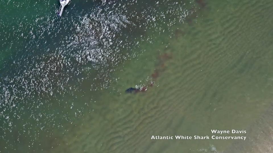 大白鯊叼「海豹」甩尾人類 跳水面激起鮮紅色浪花:驚悚10秒差點見上帝