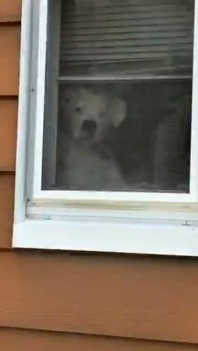 繞房子一圈!5扇窗戶都出現「同隻狗」 厭世臉緊盯:到底什麼時候帶我出門