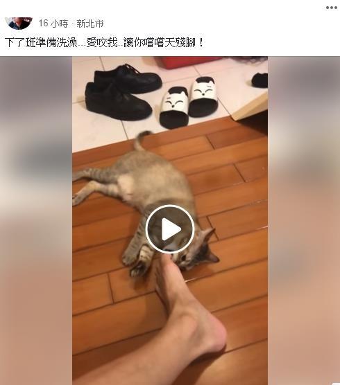 貓皇狂聞奴才腳腳+偷咬 被鹹到秒變臉:你給朕吃了啥!
