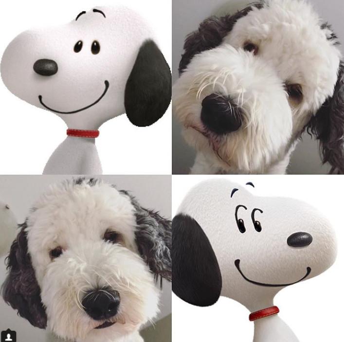 史奴比狗狗「真的誕生地球」 白臉+黑色招牌大耳朵萌翻...但卻是小惡魔呢!