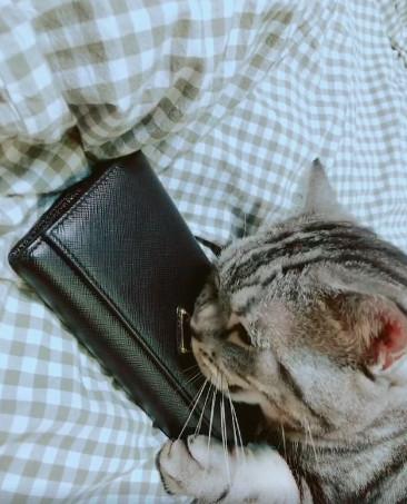 絕對識貨!大牌喵專嗑「iPhone線、萬元名牌包」 爽臉舔皮夾:嗯~這才是鈔票的味道