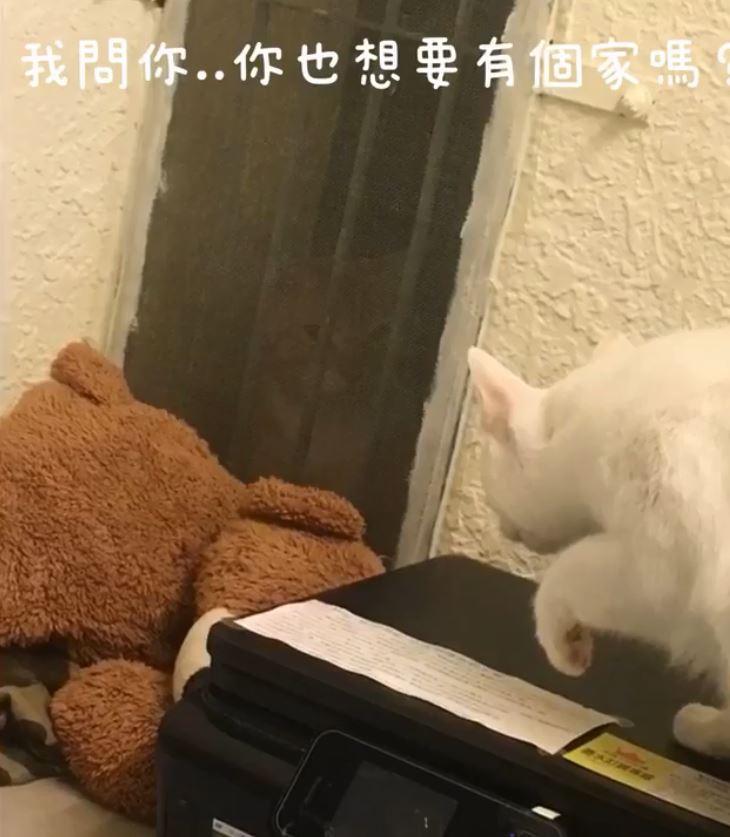 兇巴巴浪貓常默默望著房間...被收編後變好脾氣大叔 女孩:謝謝你讓我知道愛滋貓不可怕♥