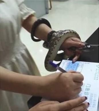暖女想救蛇反被咬 霸氣捏著一起上醫院:乖乖當老娘的手環吧!