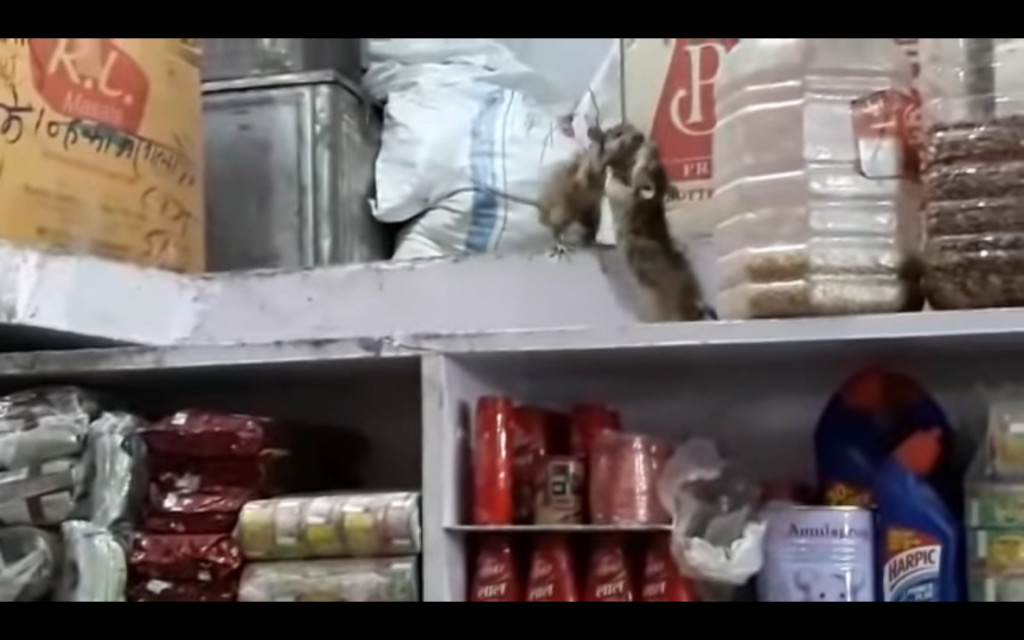 這裡不是練舞室!傑立鼠儲藏室「打格鬥戰」 網求續集:決戰食品架之巔!
