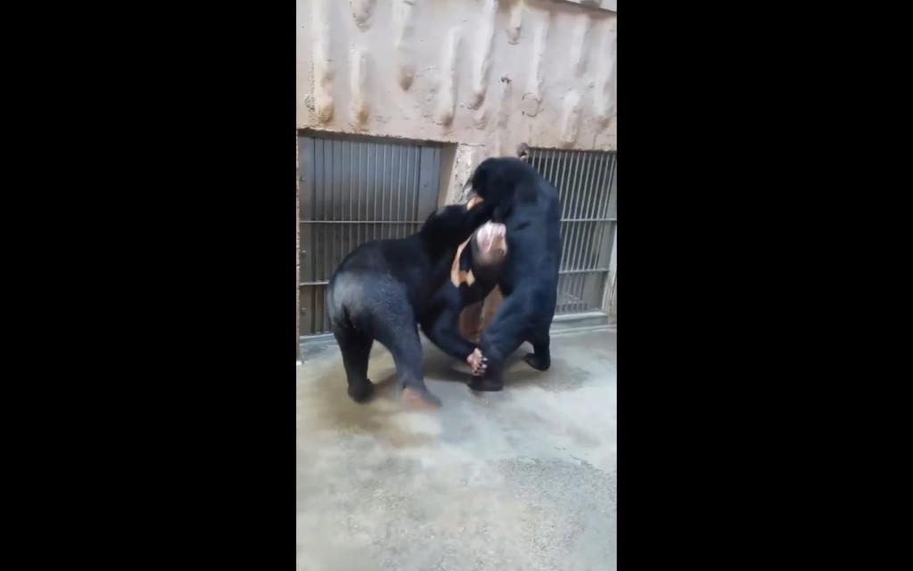 中二女兒討奶鬼叫 熊媽媽爆氣「華麗轉身巴蕊」:給老娘惦惦!