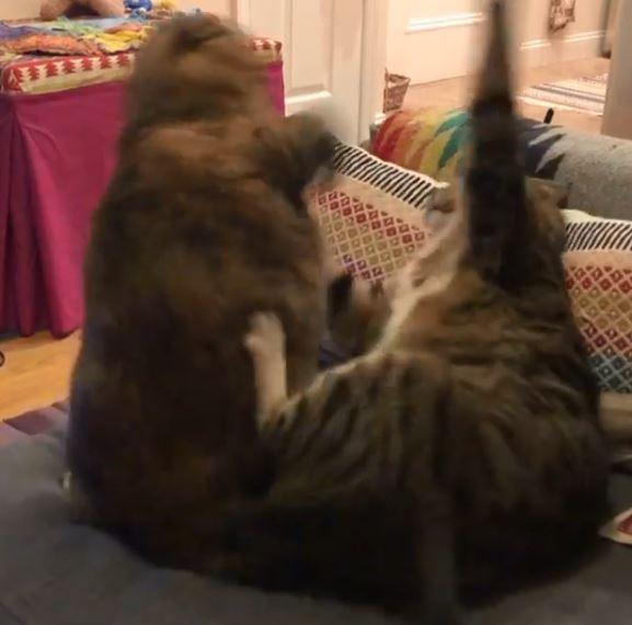 「你唸完了沒?」受不了室友碎念 喵拳伺候:你給我顛去!