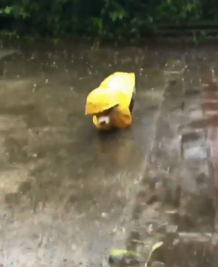 大雨中最狼狽!蠢柯G穿雨衣「短腿絆倒翻翻肚」:欸~那誰拉我一下!