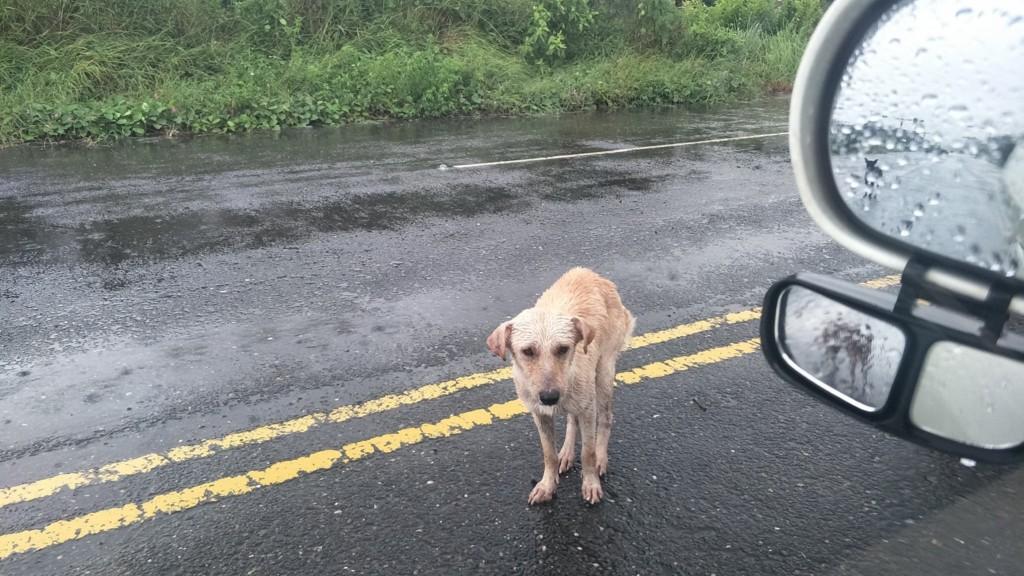 南台灣狗園接連淹水!浪浪淋雨等「唯一的一餐」 愛媽心碎:他們又餓又冷...