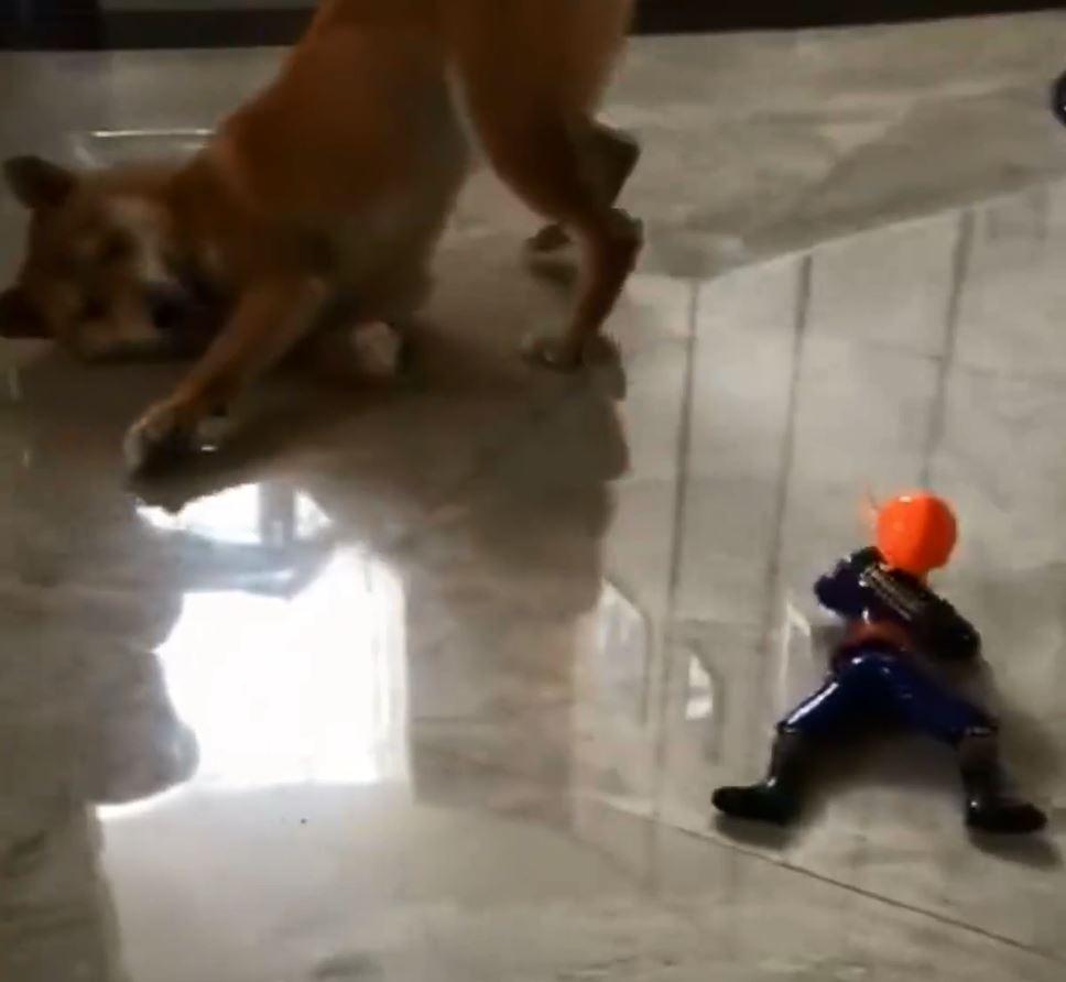 說好不開槍的!傻柴把玩具當敵人 勇戰10回:我認輸你快走...