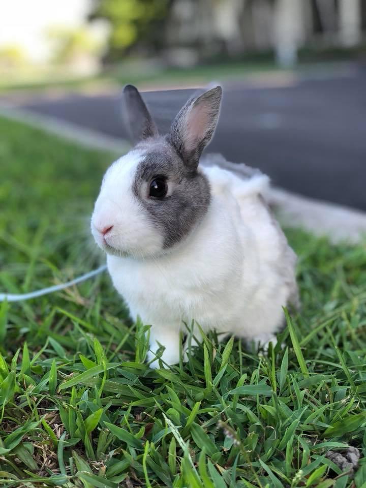 這兔夠派!「吃貨兔」食物沒了瞬間暴走 嘴巴一咬狠摔碗:林北的飯勒!