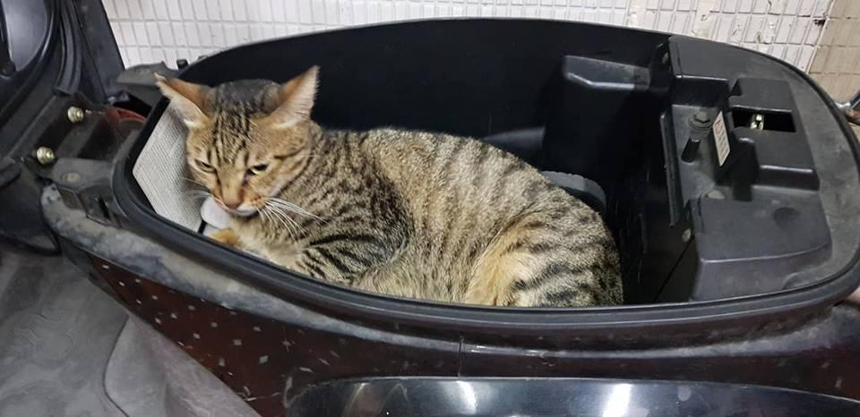 開車廂晾乾雨水 幾分鐘後卻多了一隻貓! 皺眉頭森77:走開,林北睡得正爽